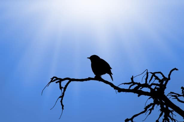 silhouette-of-the-bird-on-branch
